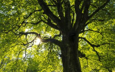 What Do Trees Have To Do With Caregiving?